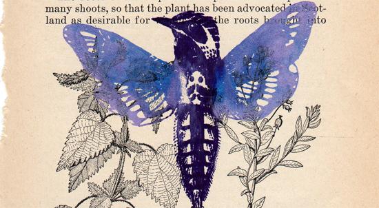 Bird-moth